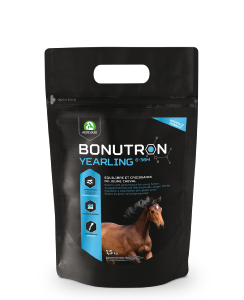 Bonutron Yearling - AUDEVARD